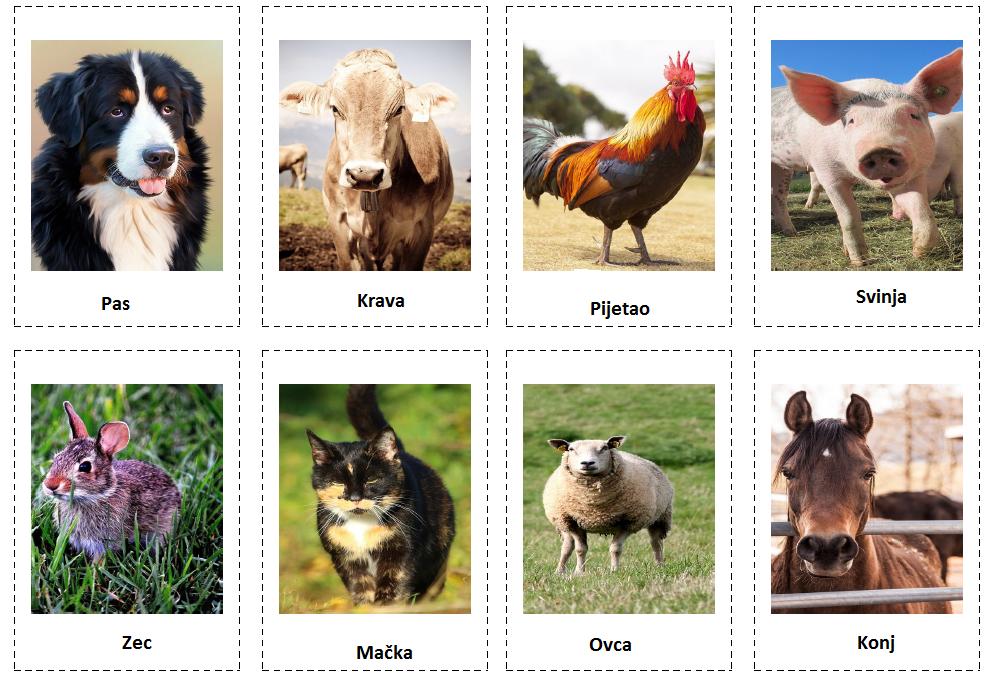 Domaće životinje (domestic animals)