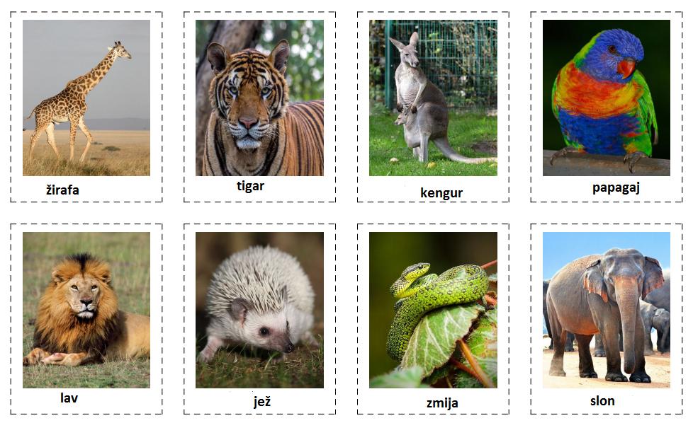 Wild animals (Divlje životinje)